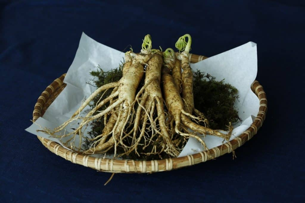 Panax Ginseng Root in 3D Energy Drink
